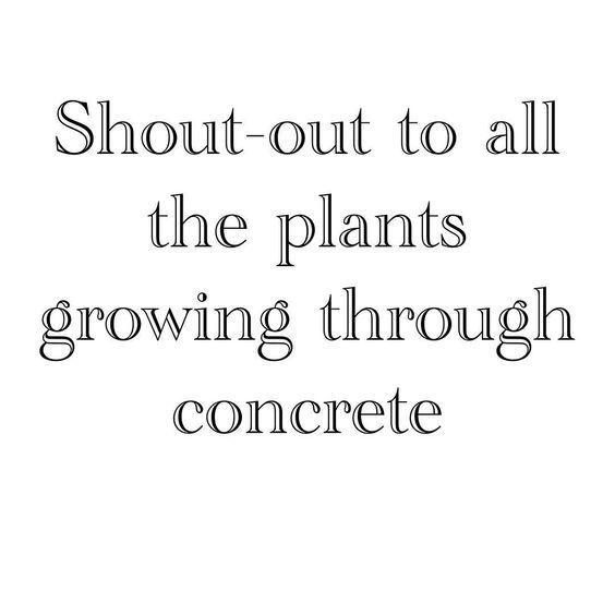 plantsthroughconcrete